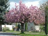 Kvetoucí Olešná